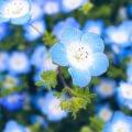 芸術をゲームに落とし込むことは可能?『Song of Bloom』に見るべき設計のあり方